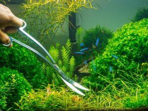 Подпитка растений